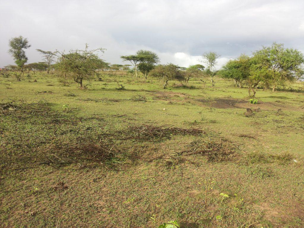 semi arid area two days after rainfall